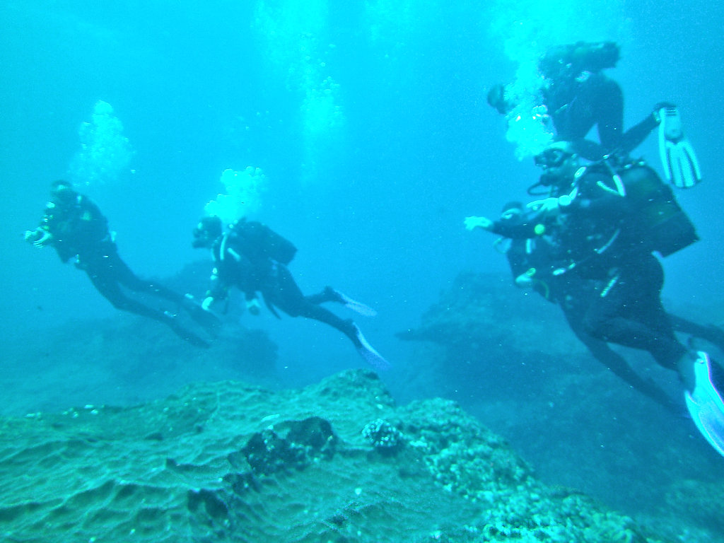 Aliwal Shoal Reef Diving